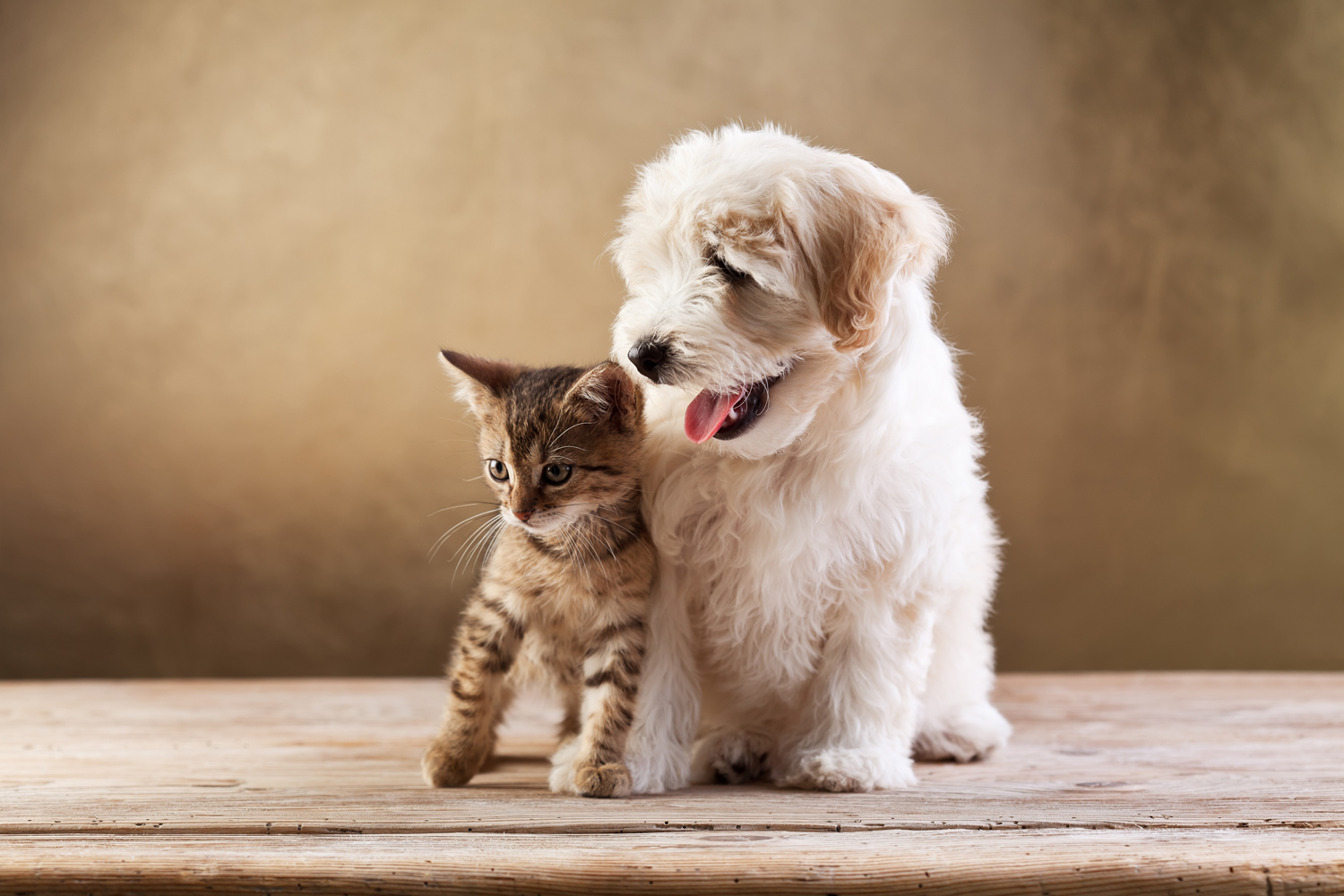 Pet Cremation Services at Family Animal Services